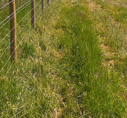 Stockdale Fencing | Post and Wire Fencing | Calverhall, Field