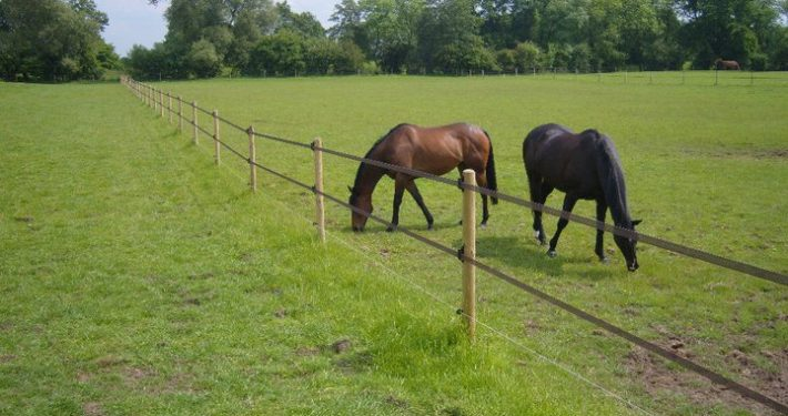 Stockdale Fencing | Wire and Wooden Livestock Fencing | Electric tape fencing
