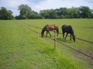Stockdale Fencing | Electrical Fencing | Equestrian Fencing