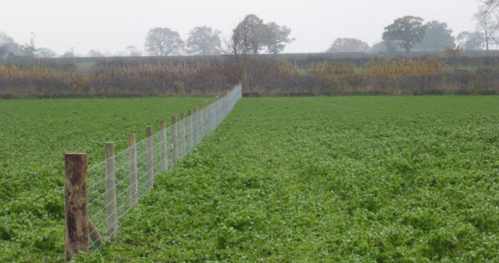 Stockdale Fencing | Livestock fence | crop and fence
