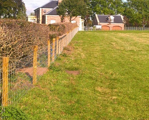 Stockdale Fencing | Sheep Fencing | Colshaw Hall
