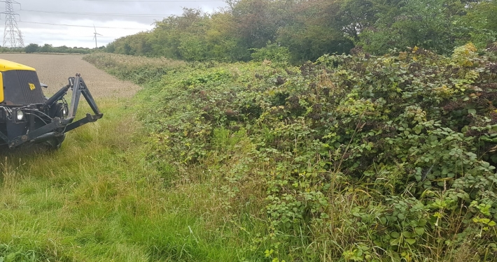 Stockdale Fencing | Fencing | Hedgerow