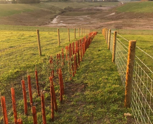 Stockdale Fencing | Post and Rail Fencing | Hedgerow planting